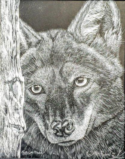 Coyote_scratchboard