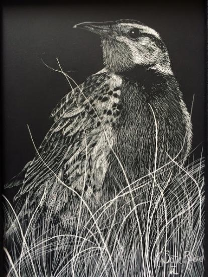 Meadowlark scratchboard