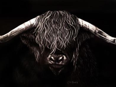 Highland Bull, 11x16, $650