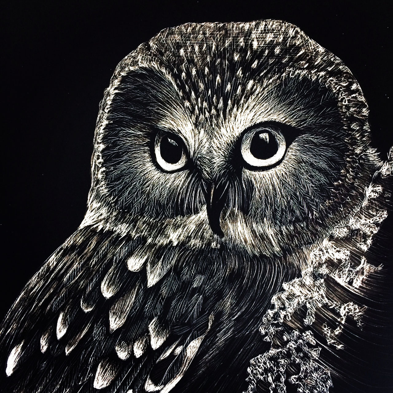 Settle Ruland-Kate- Saw Whet Owl-5x7