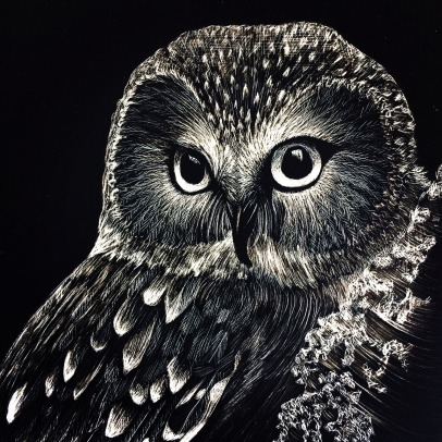 Settle Ruland-Kate- Saw Whet Owl-5x7